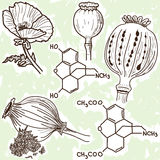 Illustration of narcotics - poppy and opium. Hand drawn style Stock Photography