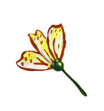 Illustration narrow petal flower yellow painted colors Royalty Free Stock Photo