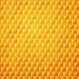 Honeycombs Stock Photo