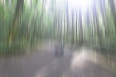 Illustration of natural sunlight background. Blurry image of trees and the lights in green, brown and white motion colors. stock images