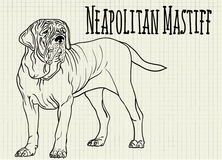 Illustration neapolitan mastiff on notebook sheet Stock Photography