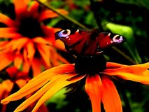 Illustration of a neon flower with a butterfly. Close-up royalty free stock images