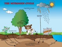 Nitrogen cycle for school royalty free stock images