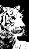 Illustration noire et blanche de vecteur de portrait de tigre illustration libre de droits
