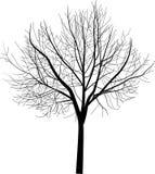 Illustration nue d'isolement d'arbre Photos stock