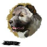 Illustration numérique d'art de chien de Gampr d'Arménien d'isolement sur le blanc Indigène de chien de gardien de bétail aux mon Image libre de droits