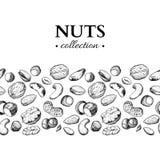 Illustration Nuts de vintage de vecteur Objets gravés tirés par la main de nourriture Images libres de droits