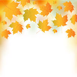 Illustration Of Autumn Leaves Stock Photography