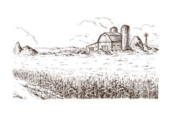Free Illustration Of Cornfield Grain Stalk Sketch Stock Photo - 91015730