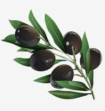 Illustration of an olive branch royalty free illustration