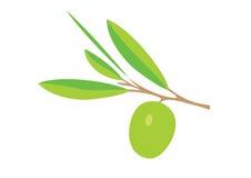 Illustration of olive brunch. Isolated on white Stock Image