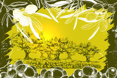 Illustration of Olive harvest landscape Stock Image
