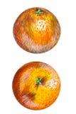 Illustration orange illustration libre de droits