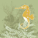 Orange Seahorse Stock Images