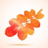 Illustration of Orange watercolor dog-rose leaf Royalty Free Stock Photo