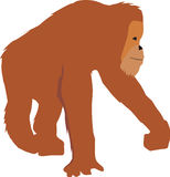 Illustration of an orangutan in a simple graphic f Royalty Free Stock Photos