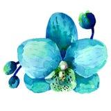 Illustration orchid flower Stock Image