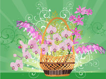 Pink orchid flowers in basket on green background Stock Photo