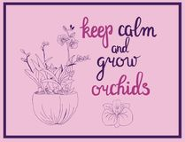 Illustration of orchid flowers and calligraphy quote keep calm. Hand drawn Vector illustration of orchid flowers and calligraphy quote keep calm and grow orchids Stock Image