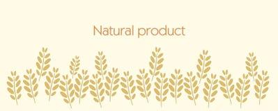 Illustration of organic food, vector. Stock Photos