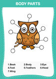 Illustration of owl vocabulary part of body Stock Images