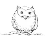 Illustration of an owl. Which is sitting on a branch Royalty Free Stock Photo