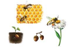 Bi på cellen, bin och honung, humla Arkivfoto