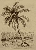 Illustration with palm on the beach Stock Images