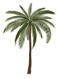Illustration of Palm Tree Royalty Free Stock Image