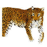 Illustration of Panthera. I drew Panther with paint and a writing brush Stock Images