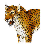 Illustration of Panthera. I drew Panther with paint and a writing brush Royalty Free Stock Photo
