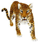 Illustration of Panthera. I drew Panther with paint and a writing brush Royalty Free Stock Photography