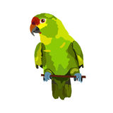 Illustration of parrot. On white background Stock Photography