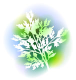Illustration With Parsley Leaves Royalty Free Stock Image