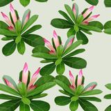 Illustration of a pattern with a potted flower stock illustration