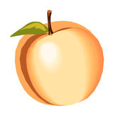 Illustration of a peach. On a white background Royalty Free Stock Photos
