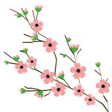 Blossom branch vector. Illustration of a peach blossom branch on a white background Stock Photos