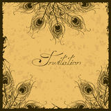 Illustration with peacock feathers decoration Royalty Free Stock Photography