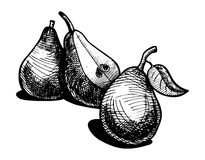 Illustration of pear Stock Photos