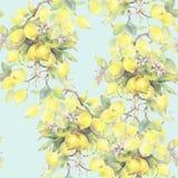 Illustration peinte à la main d'aquarelle modèle sans couture avec des éléments de branche de citronnier illustration de vecteur