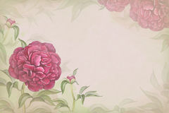 Illustration of peony flower. Perfect Royalty Free Stock Photography