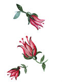 Illustration peony flowers with stems and leaves Stock Photo