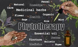 Illustration about Phytotherapy in Classic Drawing Style Vector Illustration