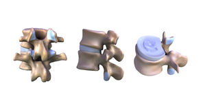 Illustration a piece of the vertebral Stock Photo