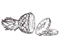 Illustration of pineapple. Ske Royalty Free Stock Photography