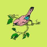 Illustration of a pink bird on a branch. Royalty Free Stock Photo