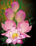 Illustration with pink lotus bouquet Stock Image