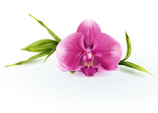 Illustration of a pink orchid Stock Photos