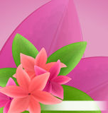 Illustration pink and red frangipani (plumeria), exotic flowers Royalty Free Stock Photo