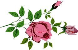 Illustration with pink rose stock illustration